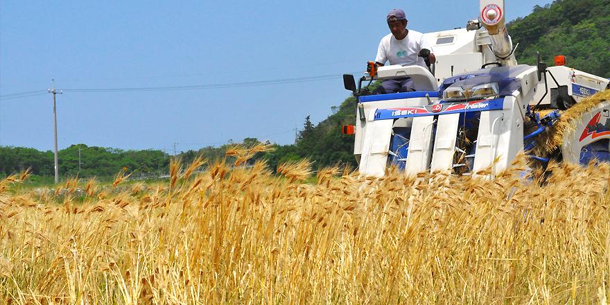 山口県地域農業戦略協議会の取組み